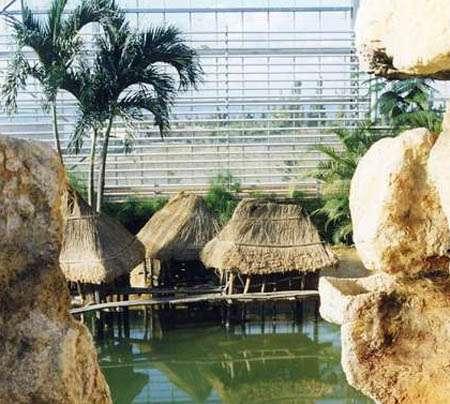 L'intérieur de la serre de la ferme aux crocodiles. © Ferme aux crocodiles