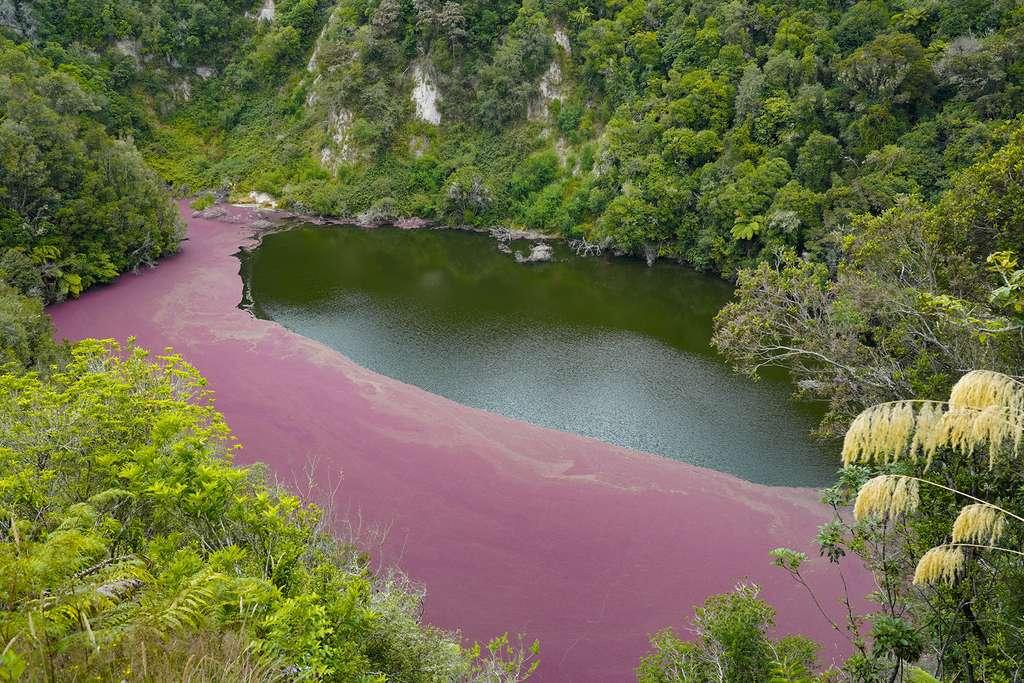 Waimangu et ses étonnantes terrasses roses