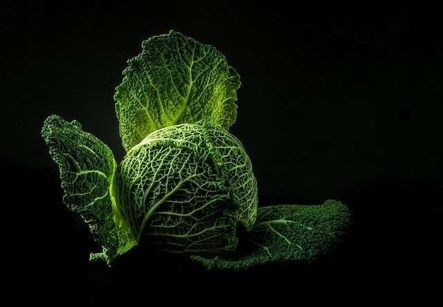 Savez-vous planter des choux ? © Nietjuh, Pixabay, DP