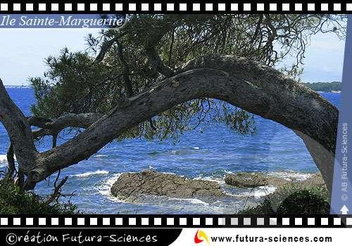 Cannes Ile Ste Marguerite