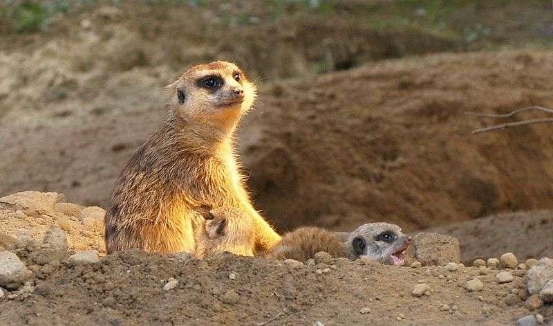 Mère et petits. © sarefo, GNU FDL Version 1.2