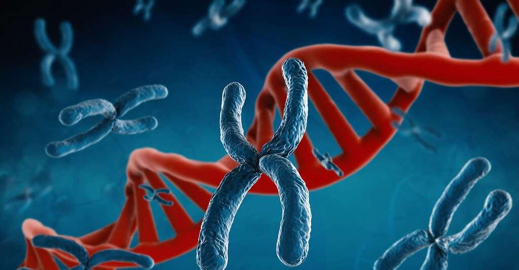 Brin d'ADN et chromosones. © Phonlamaiphoto, Fotolia