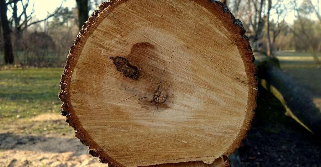 Le bois des conifères est utilisé pour de l'ameublement. © NataszaBlack, Pixabay, DP