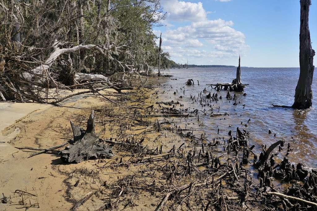 L'élévation du niveau de la mer aboutit à la mort des forêts côtières. © NCWetlands, Flickr