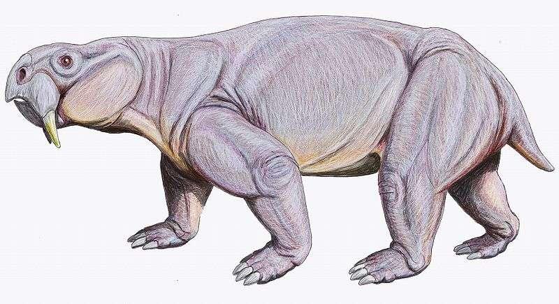 Représentation artistique d'un Dinodontosaurus turpior, un reptile mammalien qui a vécu en Amérique du Sud au Trias. Ce mégaherbivore possédait un bec cornu ainsi que de longues canines supérieures. © Dmitry Bogdanov, Wikimedia Commons, cc by 3.0