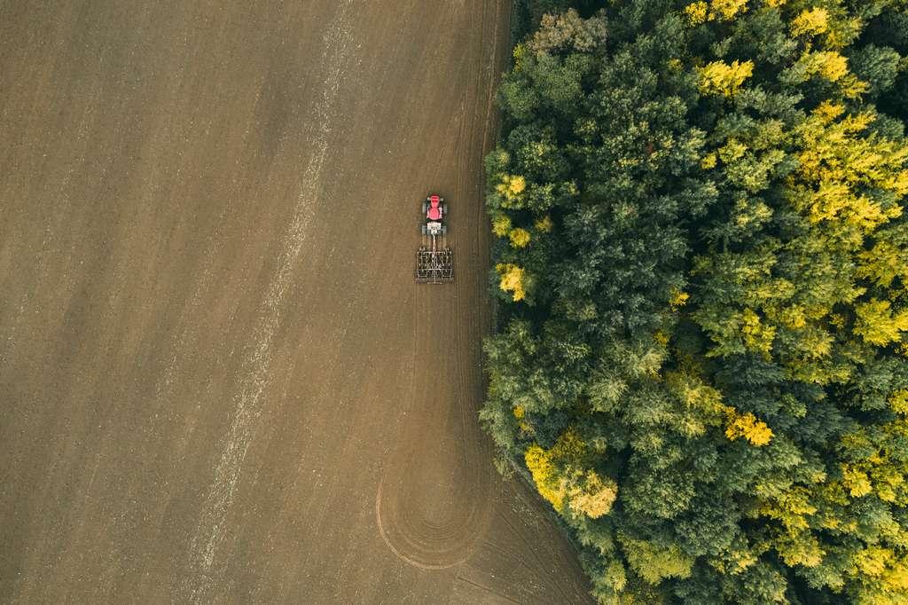 Les OGM offrant un meilleur rendement permettent de cultiver sur moins de surface, et donc de limiter la déforestation. © Viachaslau, Adobe Stock