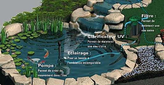 L\'entretien du bassin de jardin mois par mois | Dossier