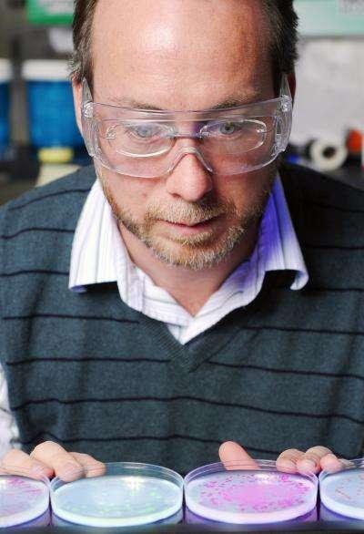 Eric Gaucher en train d'observer les bactéries exprimant les enzymes ressucitées. © Georgia Tech/Gary Meek