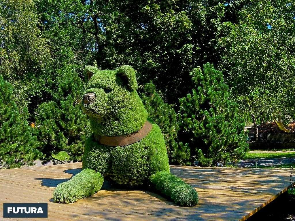 Chien, le gardien du jardin