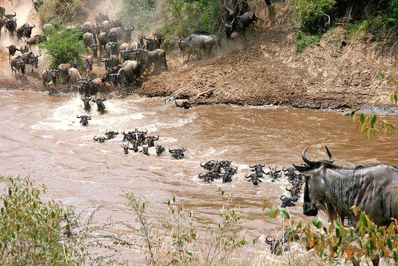 Traversée d'une rivière. © Eric Inafuku, Creative Commons Attribution 2.0 Generic