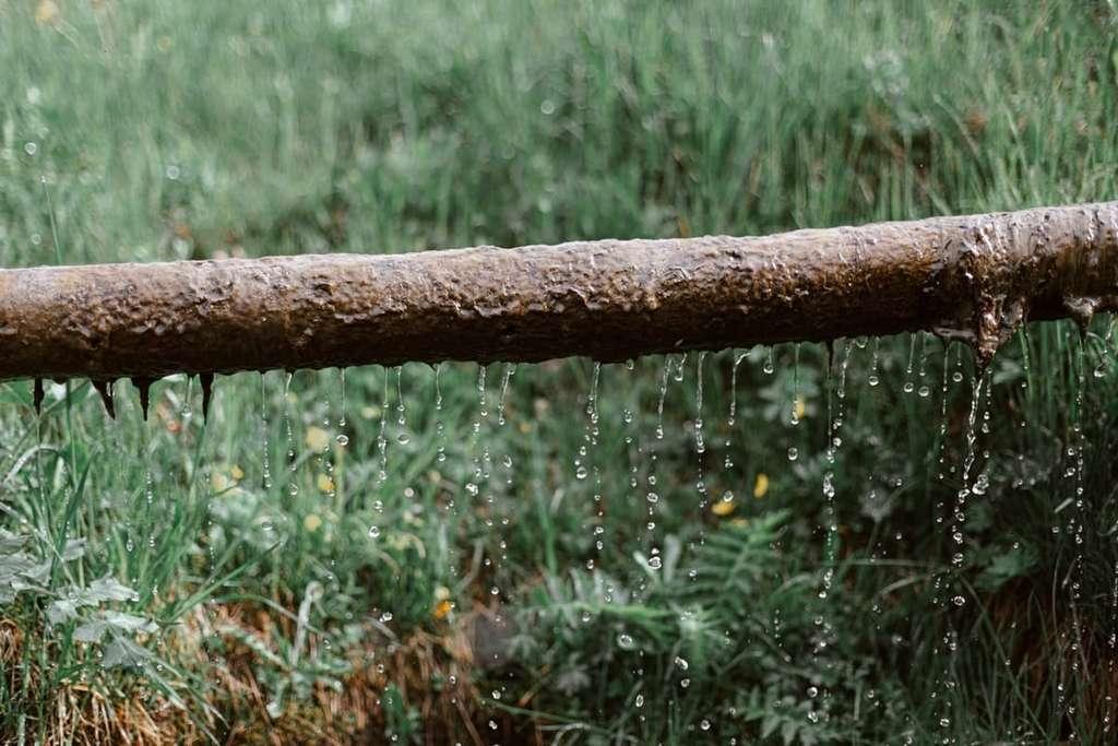 La récupération d'eau de pluie, un moyen de faire des économies. © eberhard grossgasteiger, Pexels