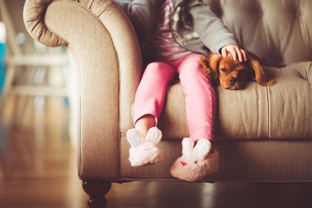 On n'adopte pas un chien comme on offre un jouet. L'acte doit être mûrement réfléchi, car il engage sur plusieurs années. © andrewicus, Pixabay, CC0 Creative Commons