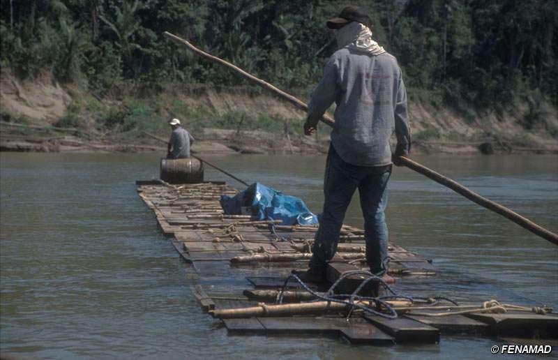 Exploitation forestière à Madre de Dios, sud-est du Pérou. © Fenamad