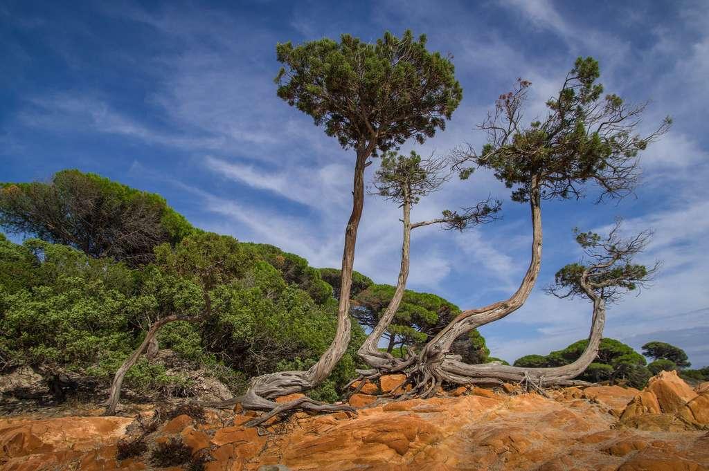La Corse, au cœur de l'environnement méditerranéen