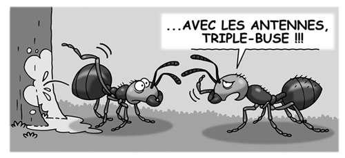 Les fourmis communiquent par phéromones. © Patrick Goulesque