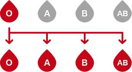 Le sang des donneurs de type O peut être transfusé à n'importe quel individu. © EFS