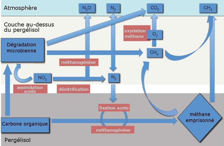 Le scénario envisagé par les chercheurs. Dans le pergélisol, le méthane est synthétisé à partir du carbone. Lors de la fonte, il est libéré dans l'atmosphère (une partie subit une oxydation menant à la formation de CO2). De l'azote issu de la dénitrification (libération de protoxyde d'azote) est capté au niveau du pergélisol induisant la synthèse de méthane. Enfin les bactéries synthétisent du dioxyde de carbone et du méthane à partir du carbone organique. © Mackelprang et al. 2011, Nature - adaptation Futura-Sciences