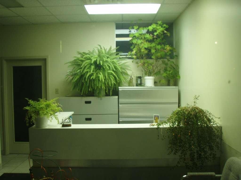 Les plantes vertes permettent une diminution de la migraine au travail, de la fatigue, de la toux ou encore de la sensation d'étouffement. © Pink Moose, Flickr, CC by-nc-sa 2.0