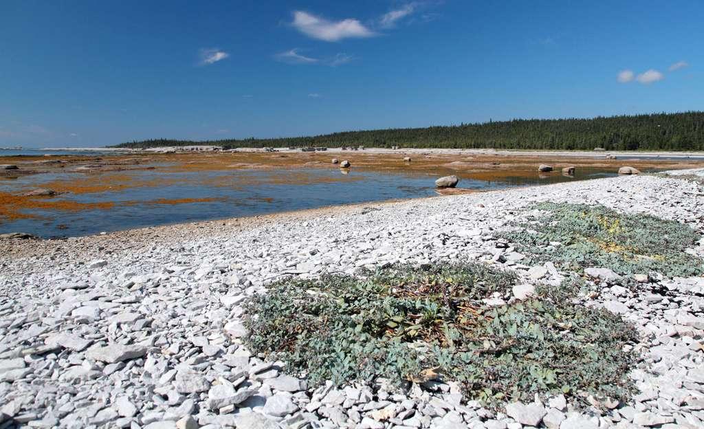 Lande à cailloutis et estran sur l'île Quarry, parc national de l'Archipel-de-Mingan, au Québec. © Cephas, Wikimedia Commons, cc by sa 3.0