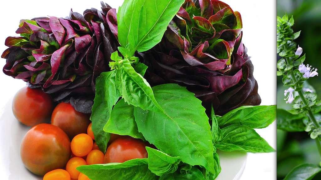 Découvrez les secrets des plantes aromatiques. Ici, du basilic, délicieux dans les salades. © M, CC by-sa 3.0 et wiwin.wr, CC by-nc 2.0