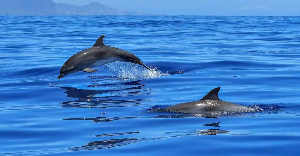 Le bleu de l'océan. © Werdepate, Pixabay, DP
