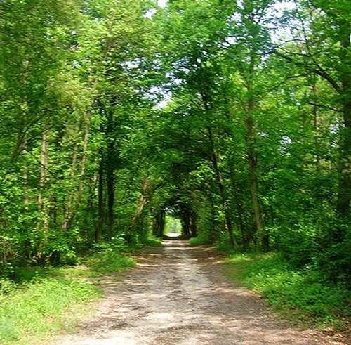 Forêt de Chantilly. © Irish21 GNU FDL 1.2