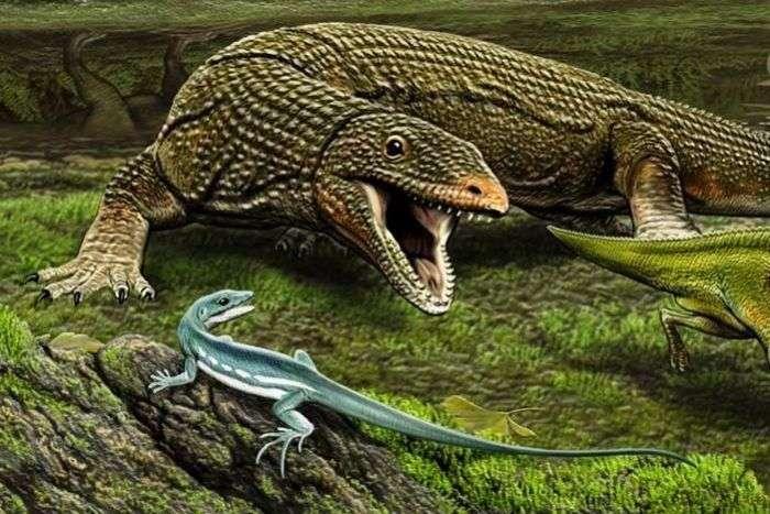 Ce lézard (en bleu sur l'image) a disparu voilà 65,5 millions d'années. Il vient d'être décrit dans la revue Pnas par Nicholas Longrich (université de Yale). Il lui a donné le nom d'Obamadon gracilis en hommage au sourire et à la dentition du président américain Barack Obama. © Carl Blue, université de Yale