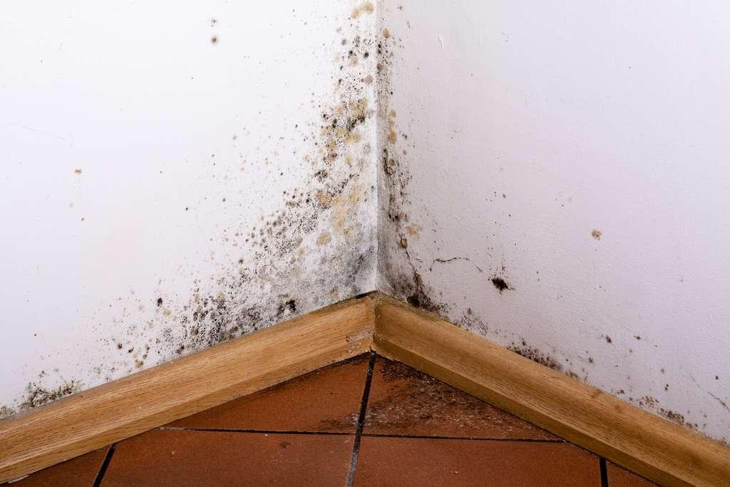 Pour remédier aux problèmes de condensation et d'humidité dans une maison, la ventilation mécanique contrôlée, ou VMC, est une bonne solution. © cegli, Adobe Stock