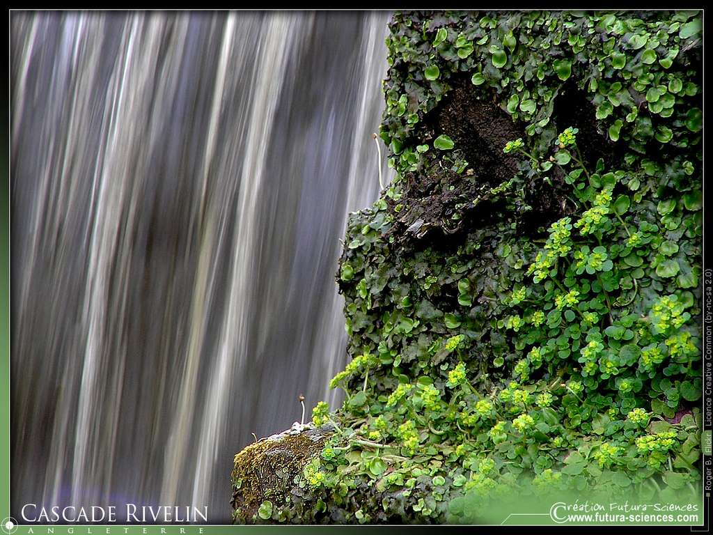 Cascade Rivelin