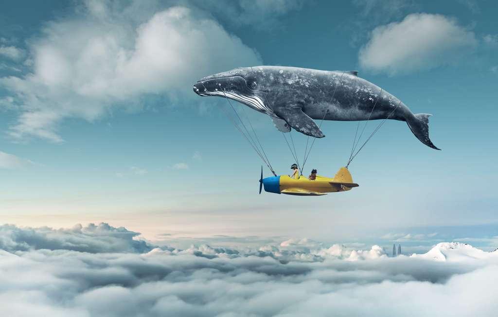 Et vous, qu'aimeriez-vous incuber dans vos rêves ? © Jamesteohart, Adobe Stock