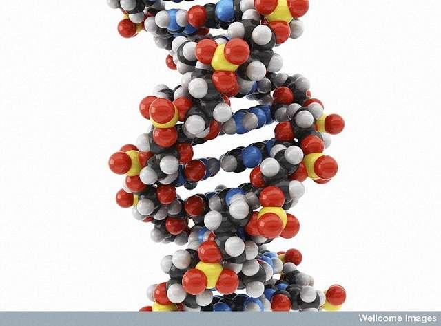 Les mutations génétiques ou nombres aberrants de chromosomes sont souvent observés dans les cas de cancer. © Maurizio De Angelis, Wellcome Images/Flickr CC by nc-nd 2.0