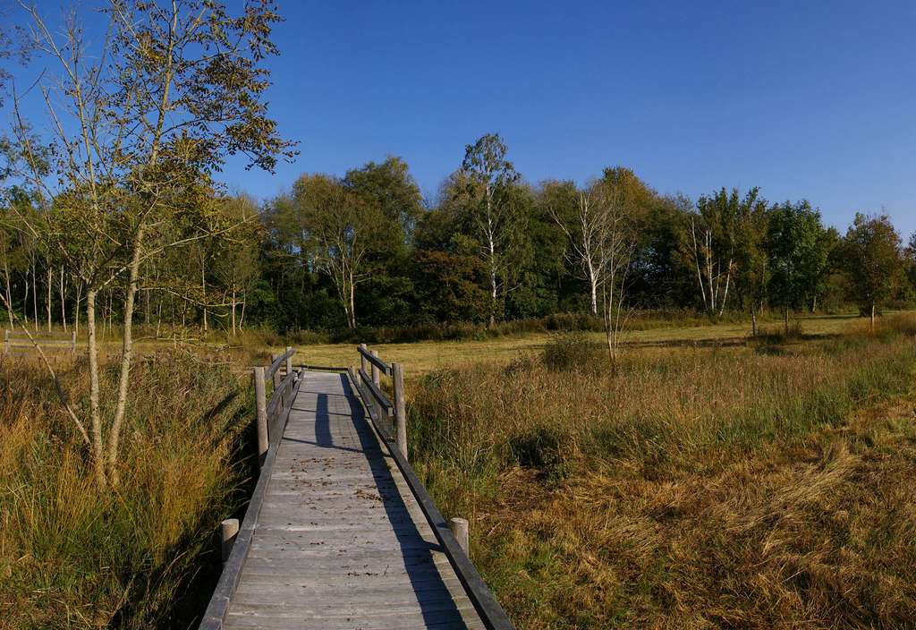 Le parcours aménagé de l'espace naturel sensible du marais d'Episy. © Pil, Flickr