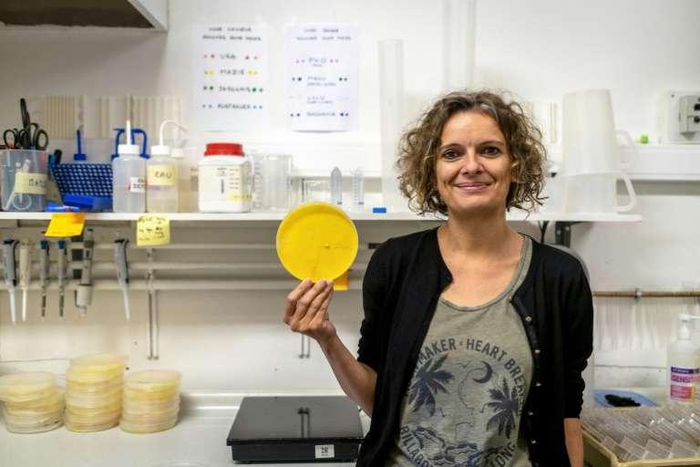 Audrey Dussutour dans son laboratoire à Toulouse le 31 mai 2019. © Éric Cabanis, AFP, Archives