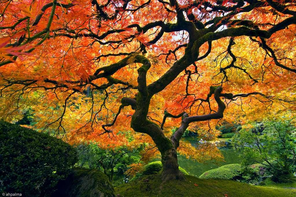 Le jardin japonais de Portland, aux États-Unis