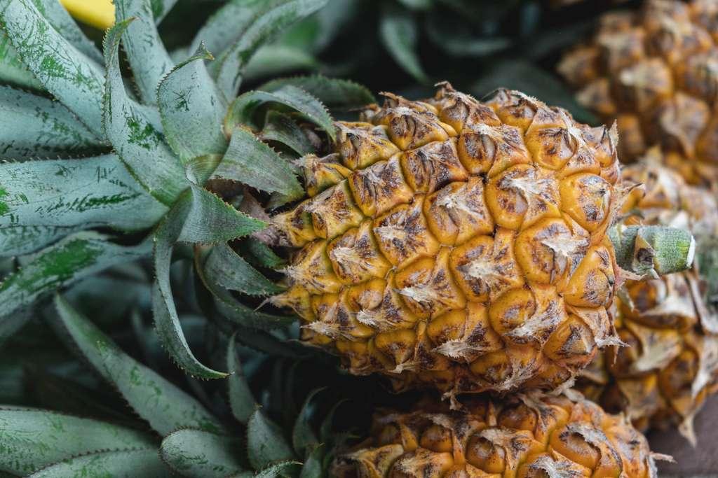 L'ananas est cultivé partout dans le monde. © Daniele Franchi, Unsplash