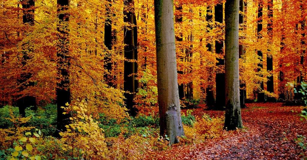 Forêt d'Automne. © Vincent Brassinne, CC by-nc 2.0