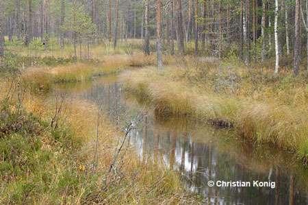 Forêt Carélie. © Christian König, tous droits réservés
