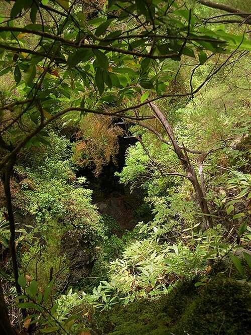Forest laurier à La Palma. © Luc Viatour GNU FDL 1.2
