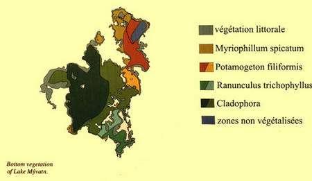 Une carte représentant la végétation à Myvatn. © DR
