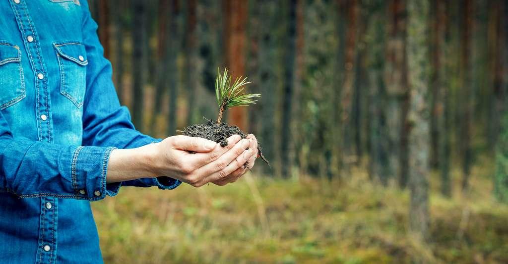 La seule chose à faire serait de replanter des espèces locales et de recréer des forêts là où elles existaient encore récemment. Ou, plus simple encore, protéger les forêts et les régions vertes existantes. Et laisser ensuite la nature faire son œuvre. © ronstik, Adobe Stock