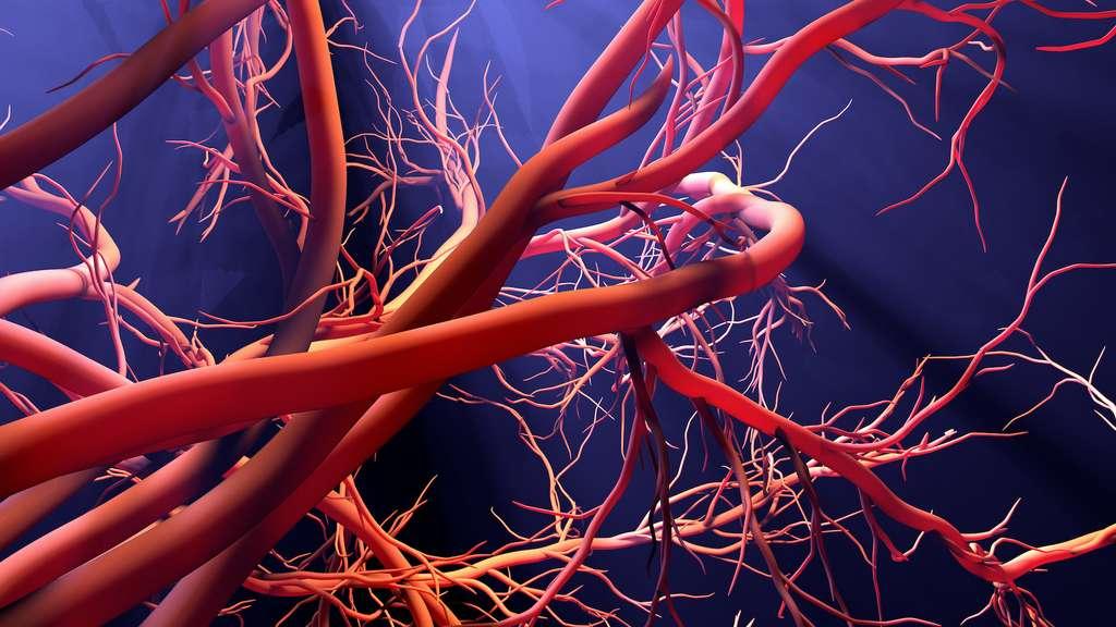 Le sulfure d'hydrogène est notamment impliqué dans la vasodilatation et l'angiogenèse. © Design Cells, Adobe Stock