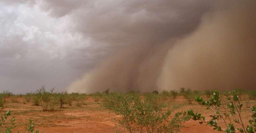 Nuage de poussière précédant la mousson sur la route de Wankama (Niger). L'agriculture représente la première ressource alimentaire dans la région du Sahel. Elle est pratiquée par les deux tiers de la population active, et rendue possible par la mousson. © Luc Descroix, IRD, tous droits réservés