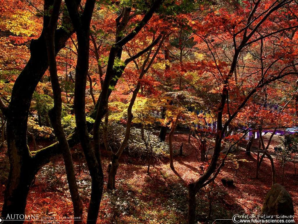 Rouge et or les couleurs de l'automne