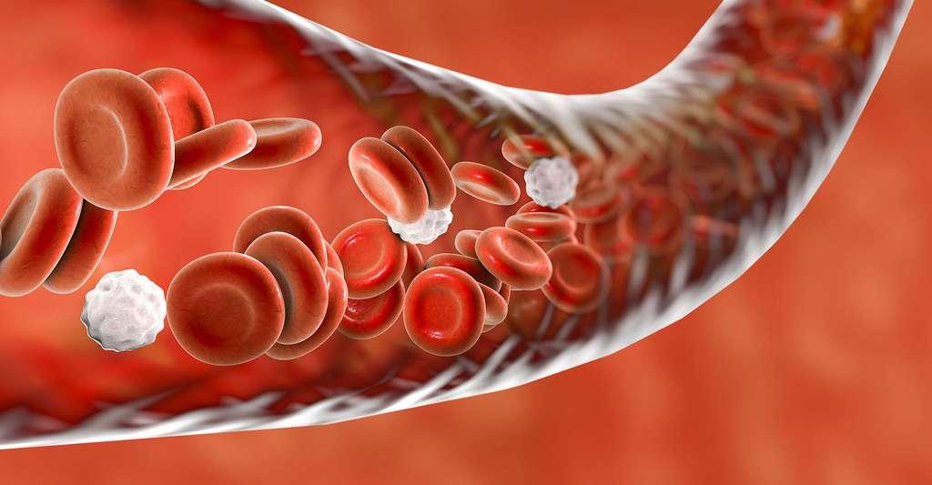 Vaisseau sanguin. © Kateryna Kon - Shutterstock