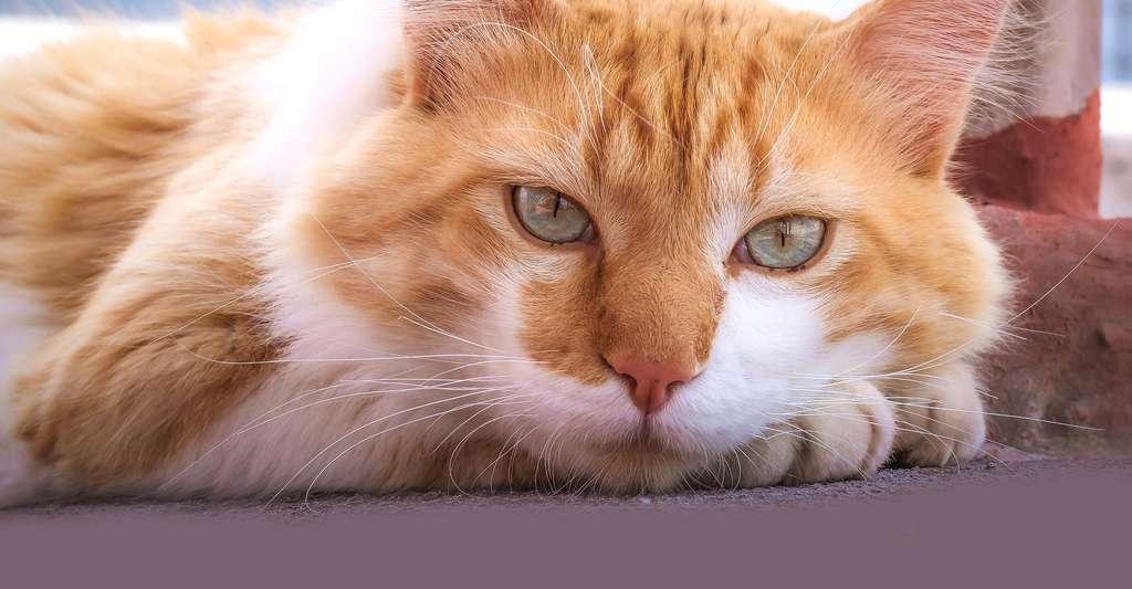 Les différentes races de chat. © Aaandrea, Pixabay, DP