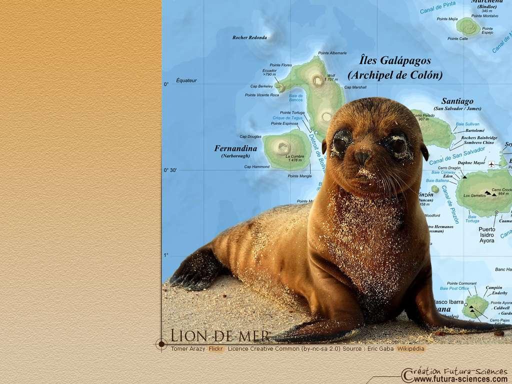 Bébé lion de mer