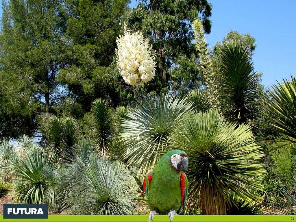 Fond D Ecran Jardin Tropical Des Oiseaux