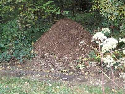 La fourmilière ? Un passage obligé si la fourmi ne veut pas perdre son chemin !