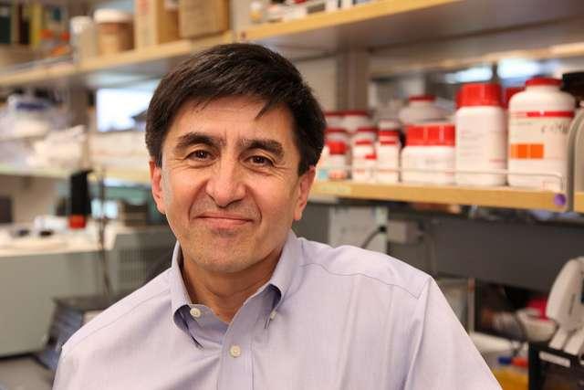 Shoukhrat Mitalipov affirme être certain d'avoir réussi à cloner des embryons humains, desquels il a pu extraire des cellules souches. Les quelques erreurs relevées dans Cell ne remettraient pas en cause sa découverte. © OHSU