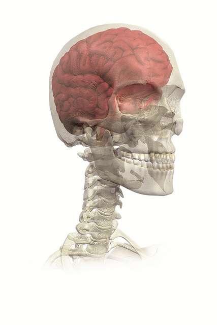 La greffe de neurones fœtaux fonctionne pour réparer les conséquences d'Alzheimer, il faut maintenant trouver d'autres sources de cellules à greffer. © Ars Electronica, Flick CC by nc-nd 2.0